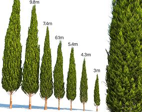 3D model mediterranean cypress