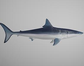 3D asset Mako Shark