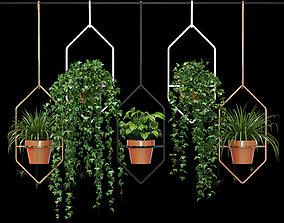 Ampelous plant 3D