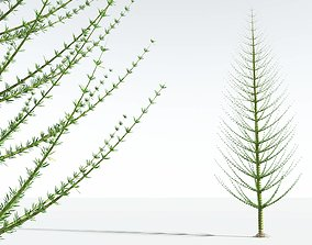 3D EVERYPlant Spiral Horsetail Tree 09 --12 Models--