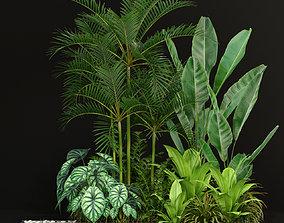 3D Plants collection 198