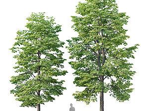 3D Tilia europaea Nr 3 H9-11m Two tree set park