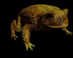 3D model frog Bull Frog