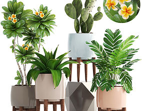 Collection of plants 3D pots