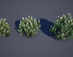 3D model Broom Baccharis