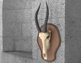 Antelope Skull 3D asset