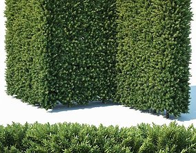 Taxus Baccata Nr4 modular hedge H200cm 3D model
