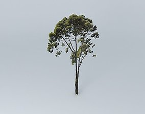 3D Maritime Pine Tree