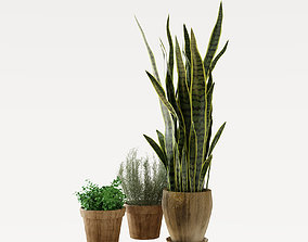 3D Sansevieria potted