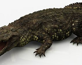 Realistic Crocodile 3D model