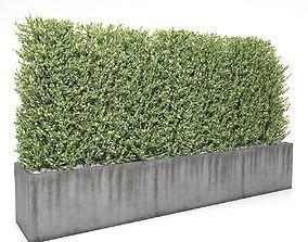 3D model Boxwood - fence 01