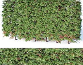 Thuya occidentalis Nr9 - hedge H120cm 3D