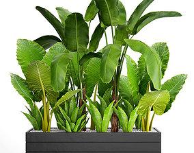 3D model Tropical plants in flowerpot 2