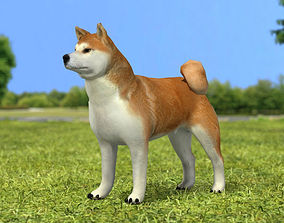 Akita Inu 3D