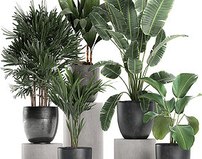 Plants in a black pot for the interior 686 3D