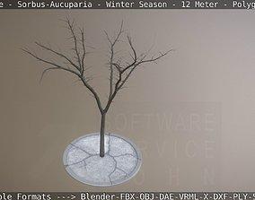 3D model Rowan Tree - Sorbus-Aucuparia - 12m - Winter