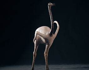 Realistic 3D model of Ostrich with RIG and texture rigged