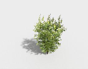 low poly tree 3D model VR / AR ready