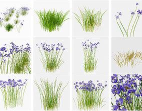 iris flower plant 3D model