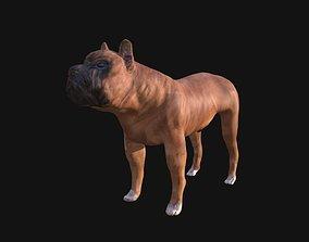 3D model realtime Boxer Dog