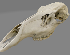 Red Stag Cow Skull 3D model