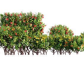 Chinese hibiscus - Hibiscus rosa-sinensis - 02 3D