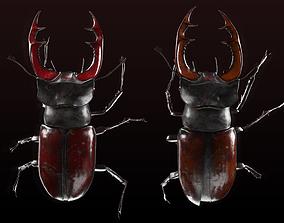3D model Lucanus cervus