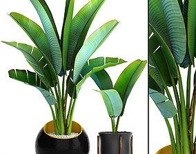 3D model Ravenala palm