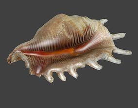 Low Poly Murex Seashell 3D model