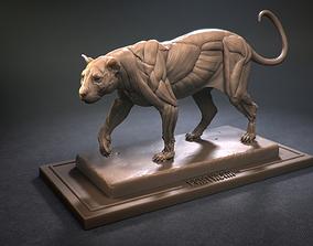 Leopard ecorche 3D print model