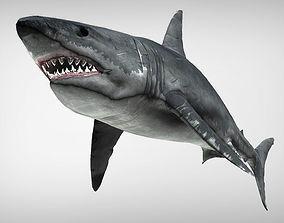 Big White Shark Megalodon 3D model