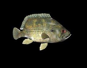 Rock Bass fish 3D model