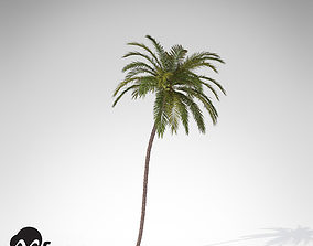 XfrogPlants Coconut palm 3D