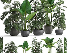 3D model Collection Exotic plants Monstera