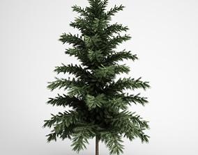3D CGAxis Scots Pine 24