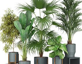 Plants collection 344 3D model