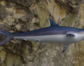 Spottail shark animated 3D asset