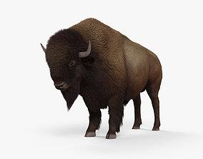 American Bison Buffalo HD 3D model