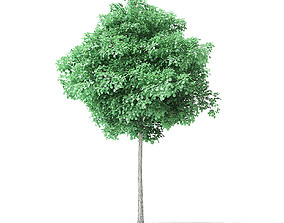 forest American Basswood Tree 3D Model 4m