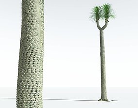 3D EVERYPlant Compact-Leafed Sigillaria 06 --18 Models--