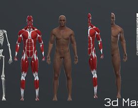 Human Man Scull Humanoid Skeleton Muscle Skin 3D asset 2