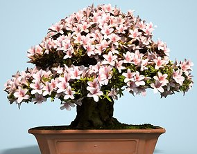 Satsuki Bonsai Tree Blossom 13 3D model