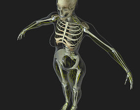 3D human Central Nervous System with Skeleton Female