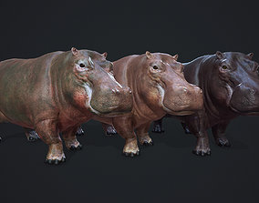 Hippopotamus 3D model animated game-ready