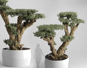 3D Olive Tree Plates Olea Europaea