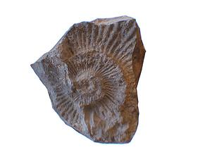 Fossil Rock 3D asset