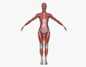 Muscle Anatomy Medical Edition Female 3D model