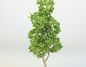 Cartoon tree Low-poly 3D model rigged