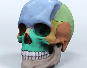 Artist Sculpted Skull Reference 3D printable model