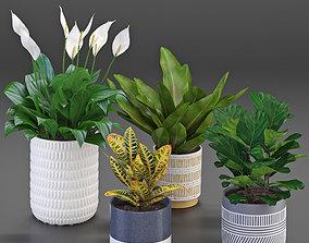Houseplant 54 3D